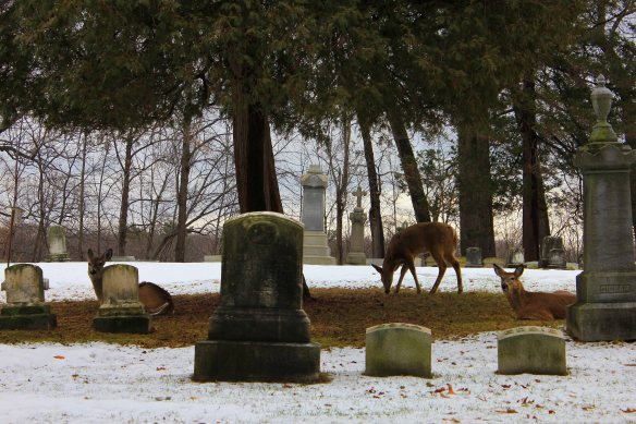 Oh deer! Our four-legged friends love a good graveyard. We saw seven more in Forest Lawn Cemetery in Buffalo the next day. Stay tuned for more Western New York adventures of a creeptastic nature!