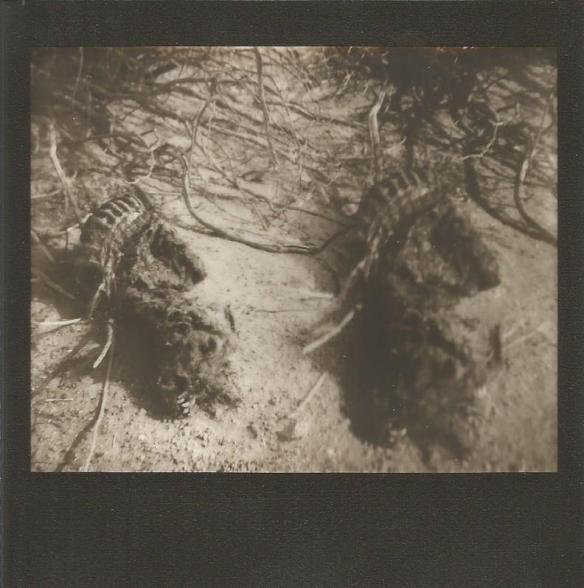 We were using our Polaroid Spectra cameras and playing with a crazy filter/accessory kit on this fine day. That's why you get to see our little friend five more times (seven if you count double exposures).